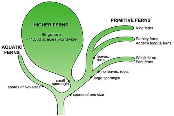 fern_tree(700)
