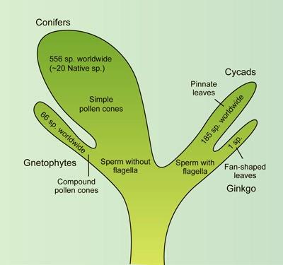 gymno_tree(400)